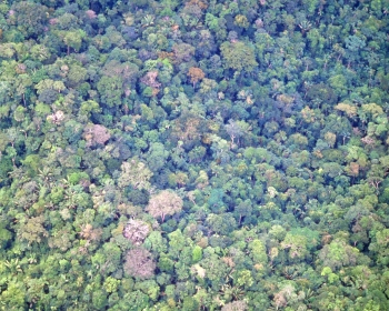 Arial shot of upper rainforest canopy foliage