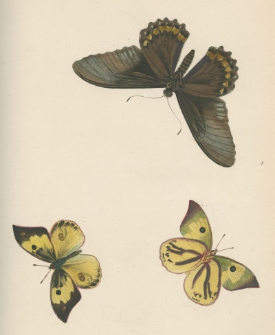 Plate 2 from 'Psyche' by Thomas Martyn, 1797