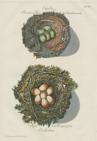Nests of the goldfinch and robin by Adam Ludwig Wirsing