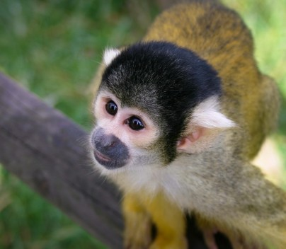 Image of monkey on branch