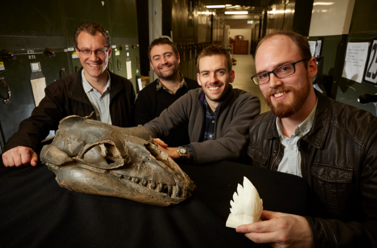 Alistair-Evans-Erich-Fitzgerald-Felix-Marx-and-David-Hocking-with-Janjucetus-skull-and-3D-tooth-model_credit_Ben-Healley-Museums-Victoria.jpg