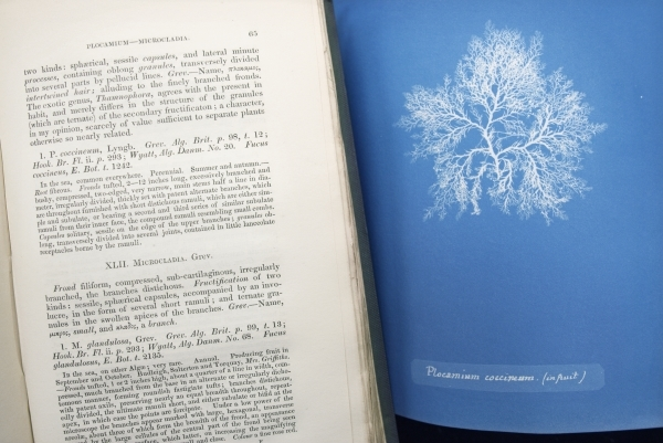 Anna Atkins and William Henry Harvey books side by side