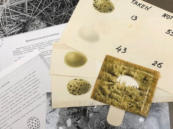 Photographs and watercolours of bird eggs with camouflage 'viewer', from Niko Tinbergen's papers