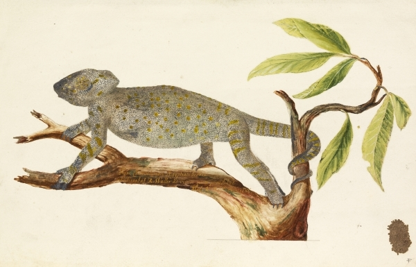 Richard Waller, Egyptian chameleon