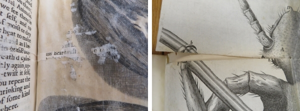 Damaged plates in Hooke's Micrographia