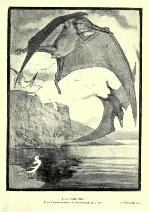'Pteranodon', by Alice Bolingbroke Woodward, from Henry Knipe's 'Evolution in the past' (1912) - Wikimedia Commons