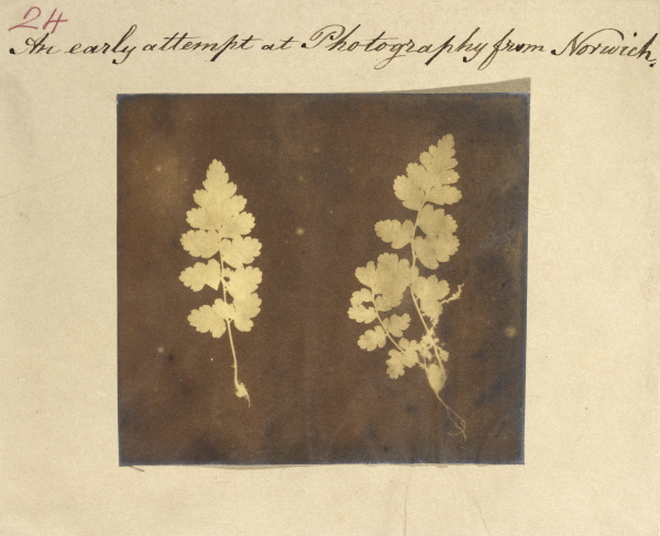 Caleb Burrell Rose, Two specimens of fern leaf, ca. 1840s
