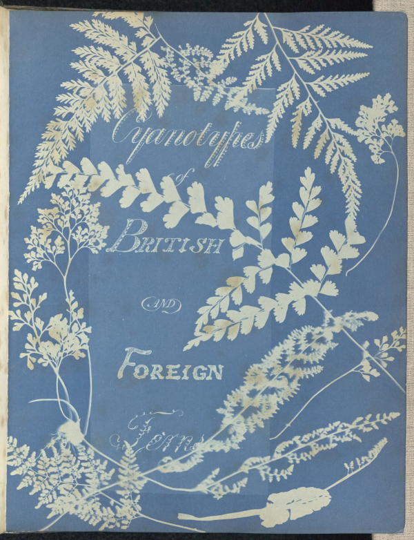 Anna Atkins and Anne Dixon, Cyanotypes of British and foreign ferns, 1853. Image from Getty's Open Content Program