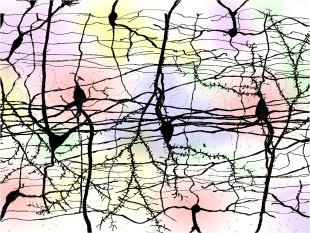 Somatic and dendritic exocytosis by neurons. Different transmitters released are ilustrated by the different colours. Image prepared by Professor Francisco F De Miguel
