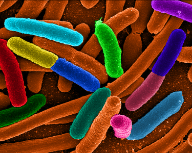 You're never alone...immune bacterial interactions in the gut