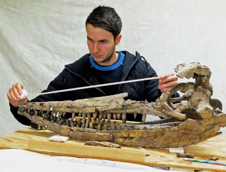 Dean Lomax studying a large, Jurassic-aged ichthyosaur skull.
