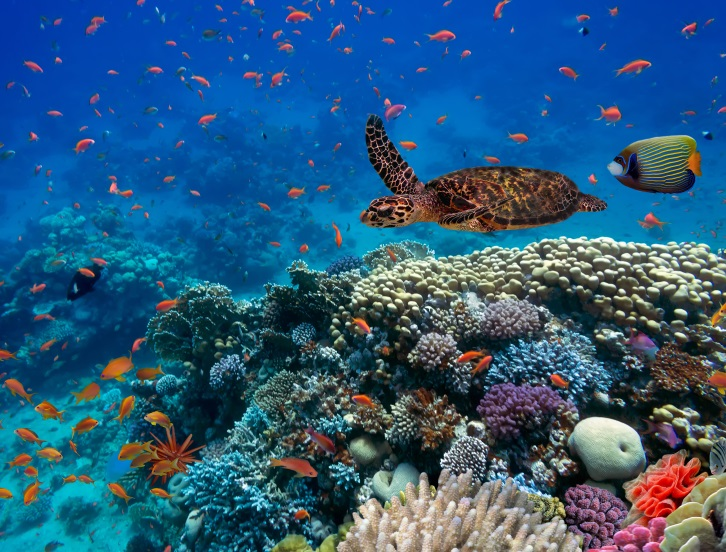 Coral reef biodiversity in the Red Sea. © vlad61.