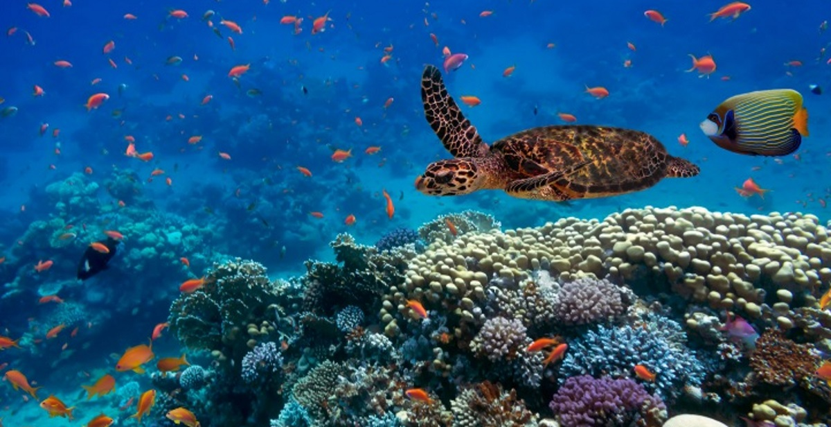Coral reef biodiversity in the Red Sea.