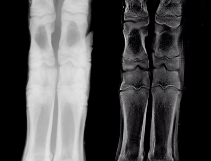 X-ray images of pig's trotters side by side, using traditional techniques and new cross-section techniques. The new techniques show the internal structure in higher resolution.