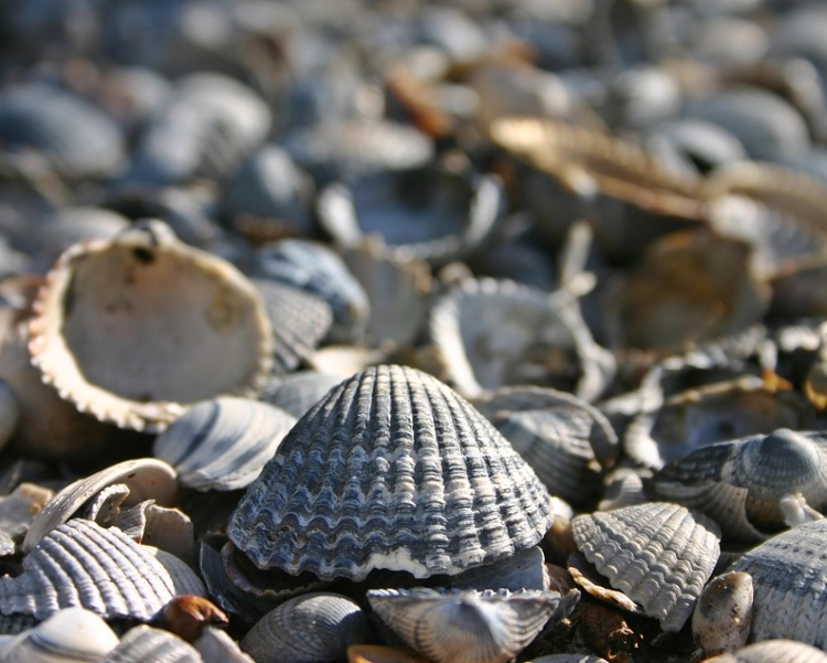William Lyons, Tenby's unlauded builder of a seminal shell collection