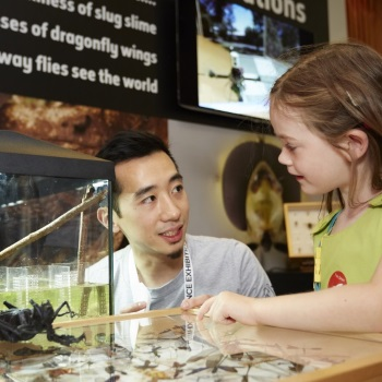 Researcher talking to a child in a green top who is leaning over a case filled with insect specimen.