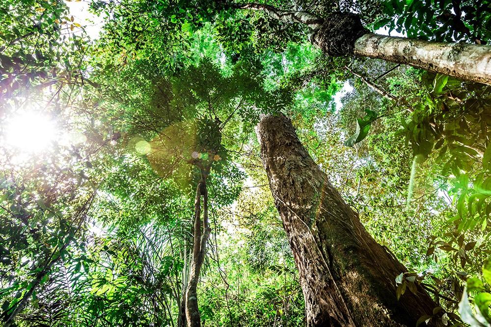 La selva amazónica, Brasil