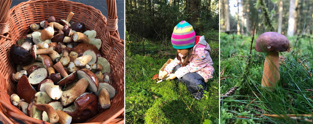 Composite image of wild mushrooms and a child picking mushrooms