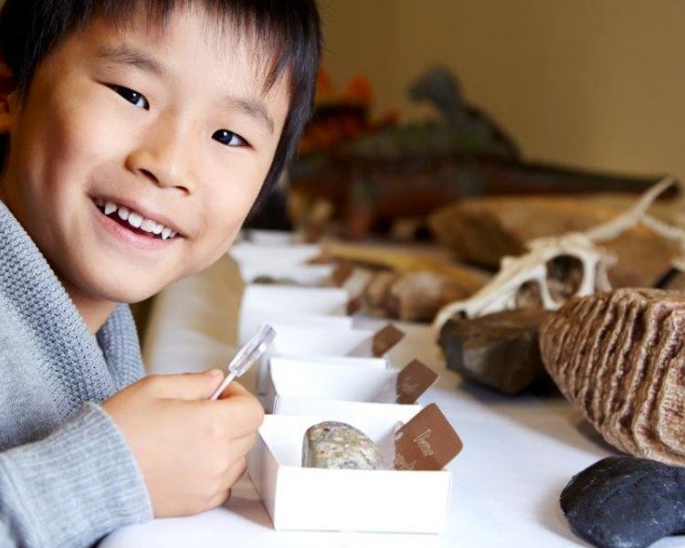 Child looking at specimens