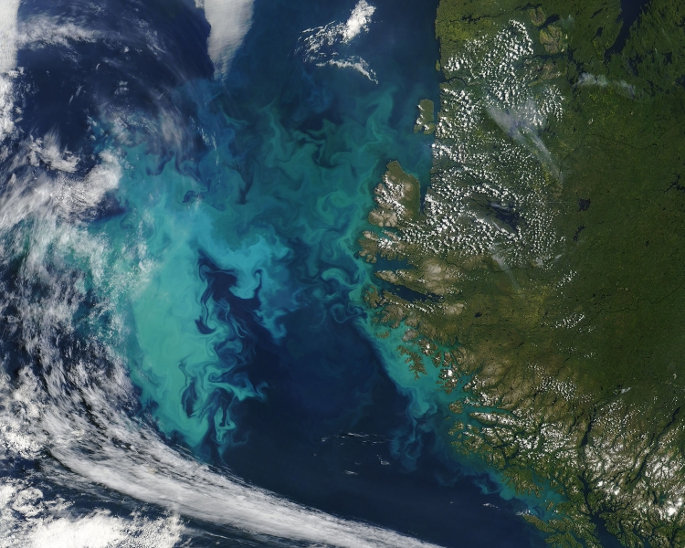 Photo of a dark blue ocean with light blue swirling patterns. This image is of a phytoplankton bloom captured by the Moderate Resolution Imaging Spectroradiometer (MODIS) on NASA's Terra satellite on August 1, 2004.