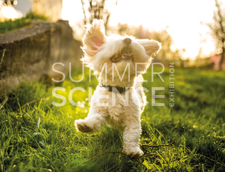 Summer Science Exhibition: a white puppy playing in grass