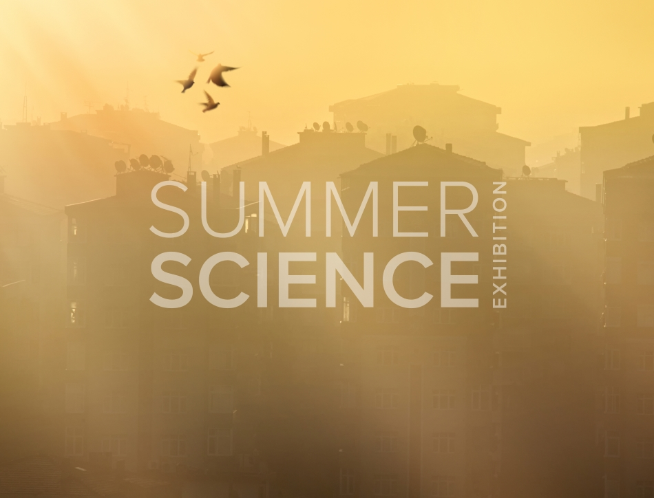 Summer Science Exhibition: birds flying in a foggy skyline