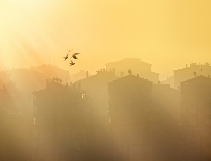 Birds fly through smog city skyline