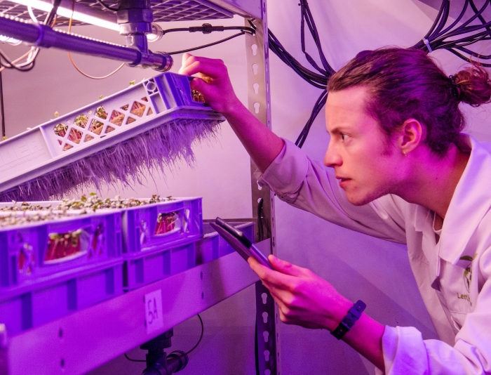 Scientist observing vertical farm