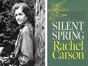 essay about silent spring Free essay: analysis of silent spring by rachel carson review: this book was focused on the concern of pesticides that industries, along with us as.