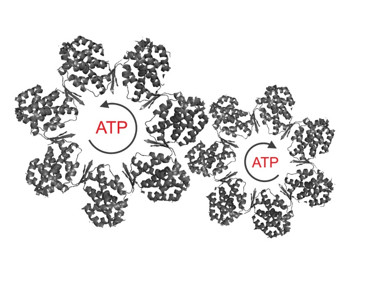 Many cellular machines are ring shaped oligomeric proteins that function by undergoing ATP driven cycling through multiple allosteric states.