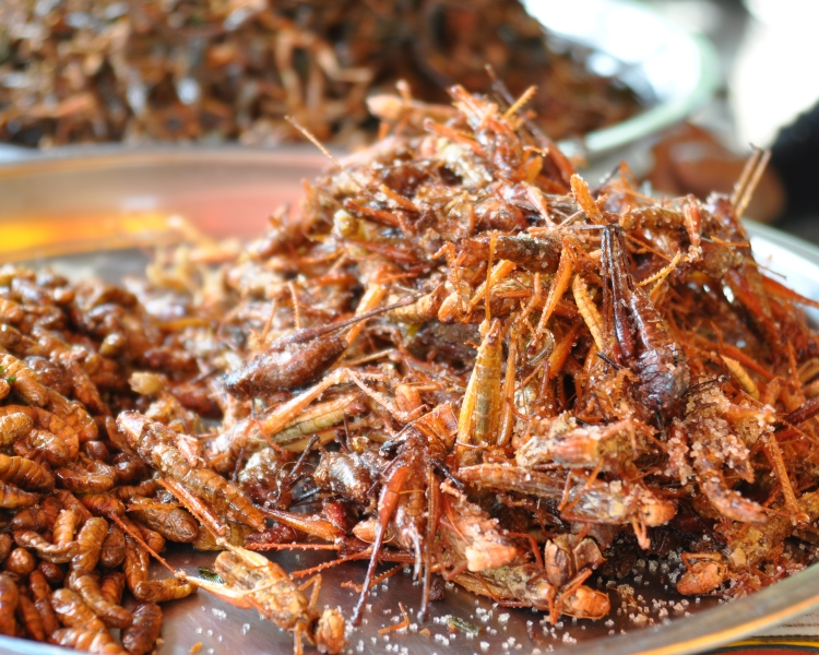 Is insect protein the future? Image credit flickr.com- shankars CC BY 2.0